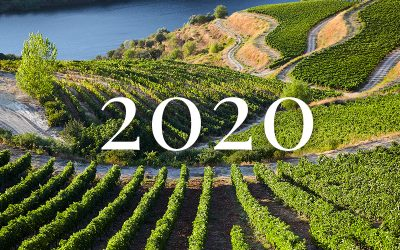Vindima de 2020